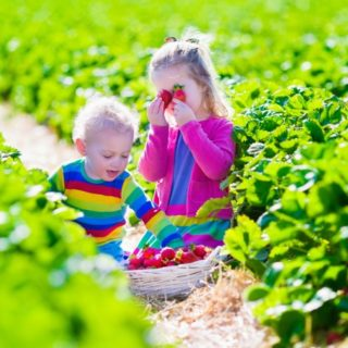 Organic Food for Kids