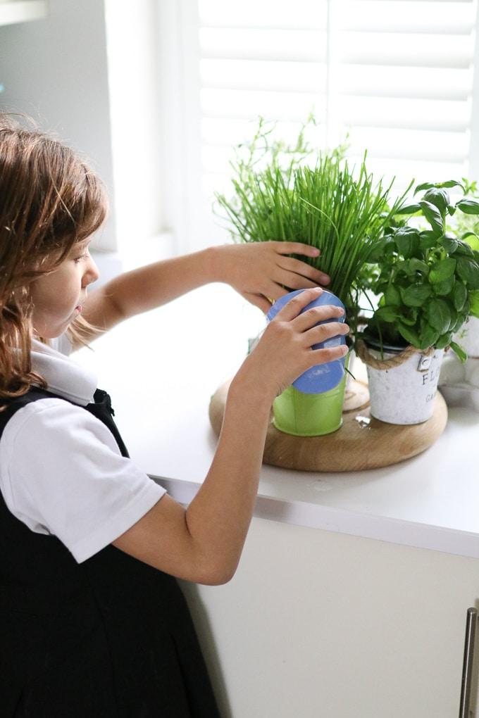 child watering indoor herb pots